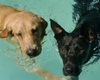 pet friendly hotels in santa barbara, dogs allowed hotels in santa barbara california